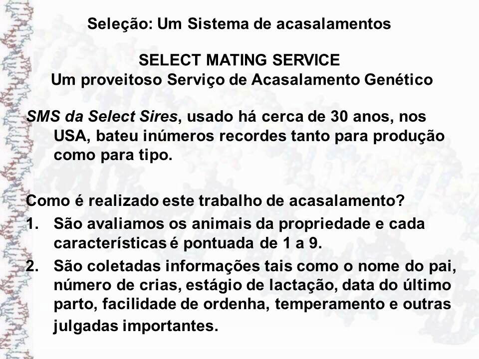 Seleção: Um Sistema de acasalamentos SMS da Select Sires, usado há cerca de 30 anos, nos USA, bateu inúmeros recordes tanto para produção como para ti