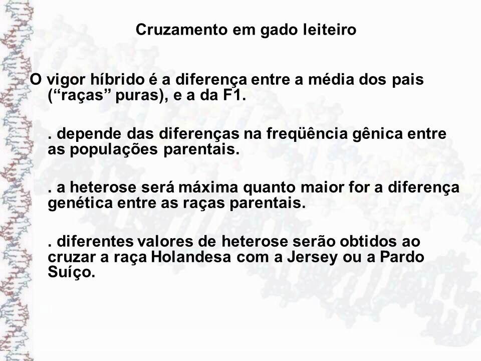 Cruzamento em gado leiteiro O vigor híbrido é a diferença entre a média dos pais (raças puras), e a da F1.. depende das diferenças na freqüência gênic