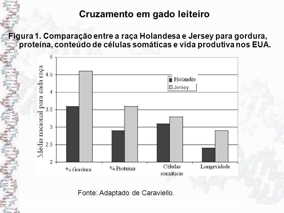 Cruzamento em gado leiteiro Figura 1. Comparação entre a raça Holandesa e Jersey para gordura, proteína, conteúdo de células somáticas e vida produtiv