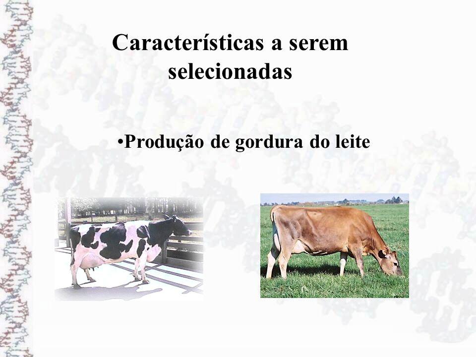 Produção de gordura do leite Características a serem selecionadas