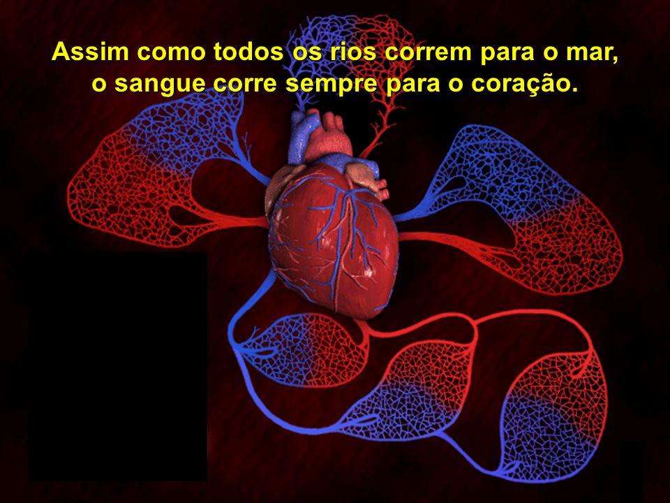 Copyright © RHVIDA S/C Ltda. www.rhvida.com.br Para realizar este trabalho, o sangue precisa circular por todo o organismo.