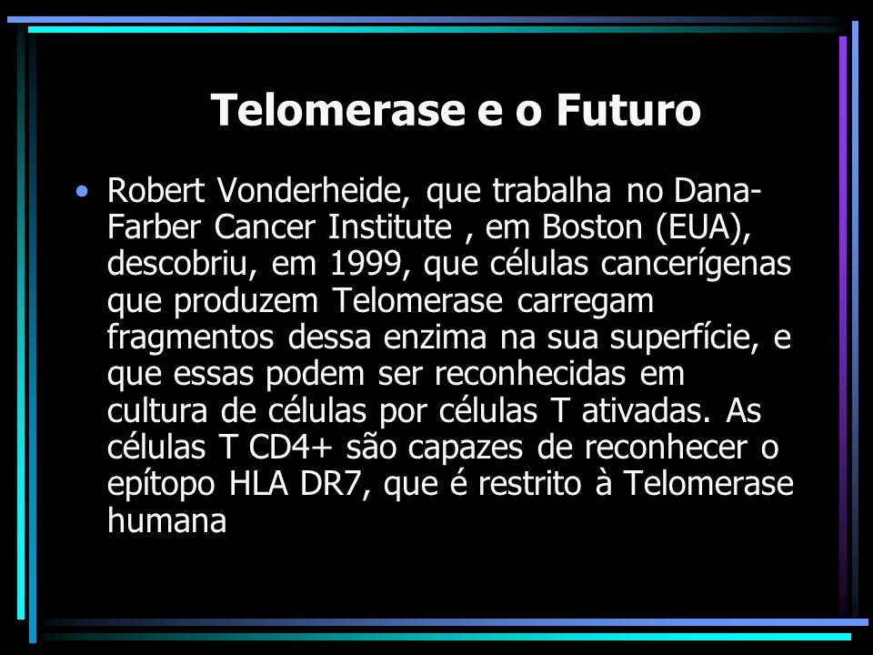 A Telomerase e o Futuro Robert Vonderheide, que trabalha no Dana- Farber Cancer Institute, em Boston (EUA), descobriu, em 1999, que células cancerígen