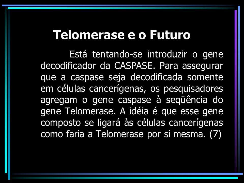 Telomerase e o Futuro Está tentando-se introduzir o gene decodificador da CASPASE. Para assegurar que a caspase seja decodificada somente em células c