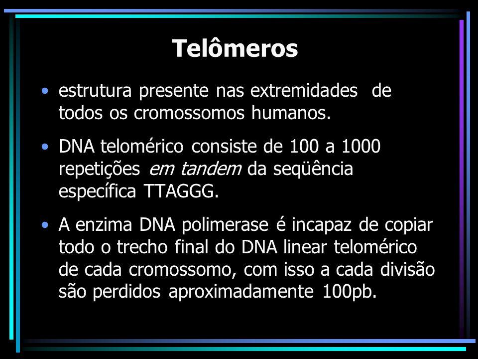 Telômeros estrutura presente nas extremidades de todos os cromossomos humanos. DNA telomérico consiste de 100 a 1000 repetições em tandem da seqüência