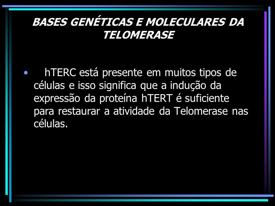 BASES GENÉTICAS E MOLECULARES DA TELOMERASE TELOMERASE O hTERC está presente em muitos tipos de células e isso significa que a indução da expressão da