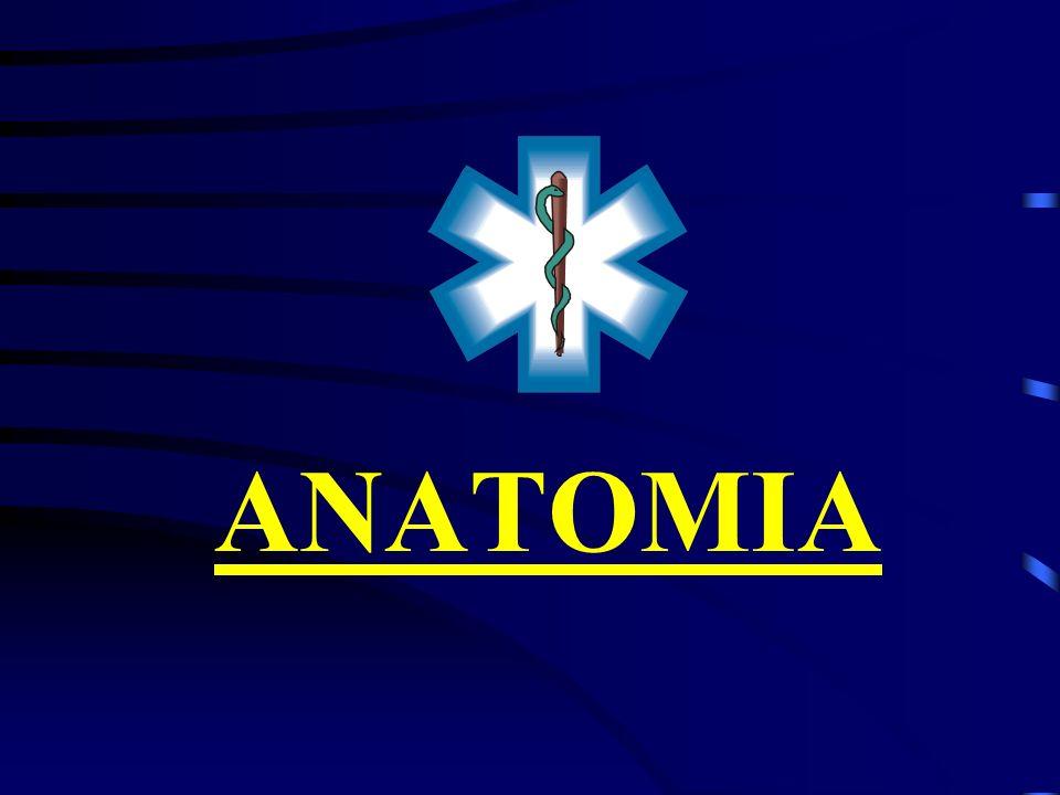 Pressão Arterial - PA É a pressão que o sangue exerce na parede das artérias: Sistólica Pressão Sistólica : é a pressão máxima – 110 a 140 mmHg.