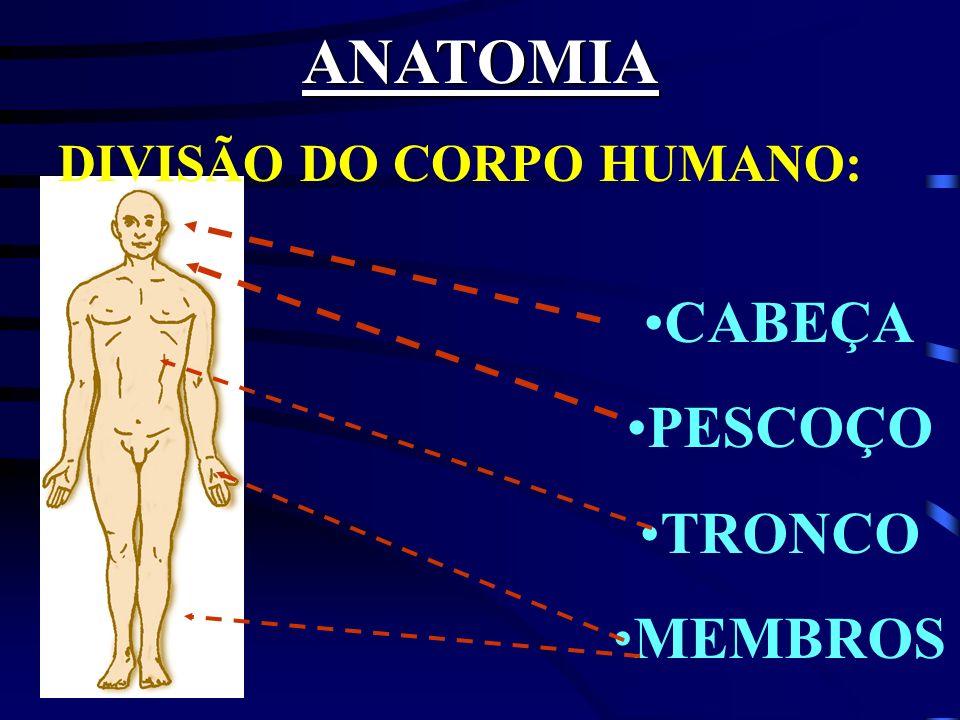 ANATOMIA DIVISÃO DO CORPO HUMANO: CABEÇA PESCOÇO TRONCO MEMBROS