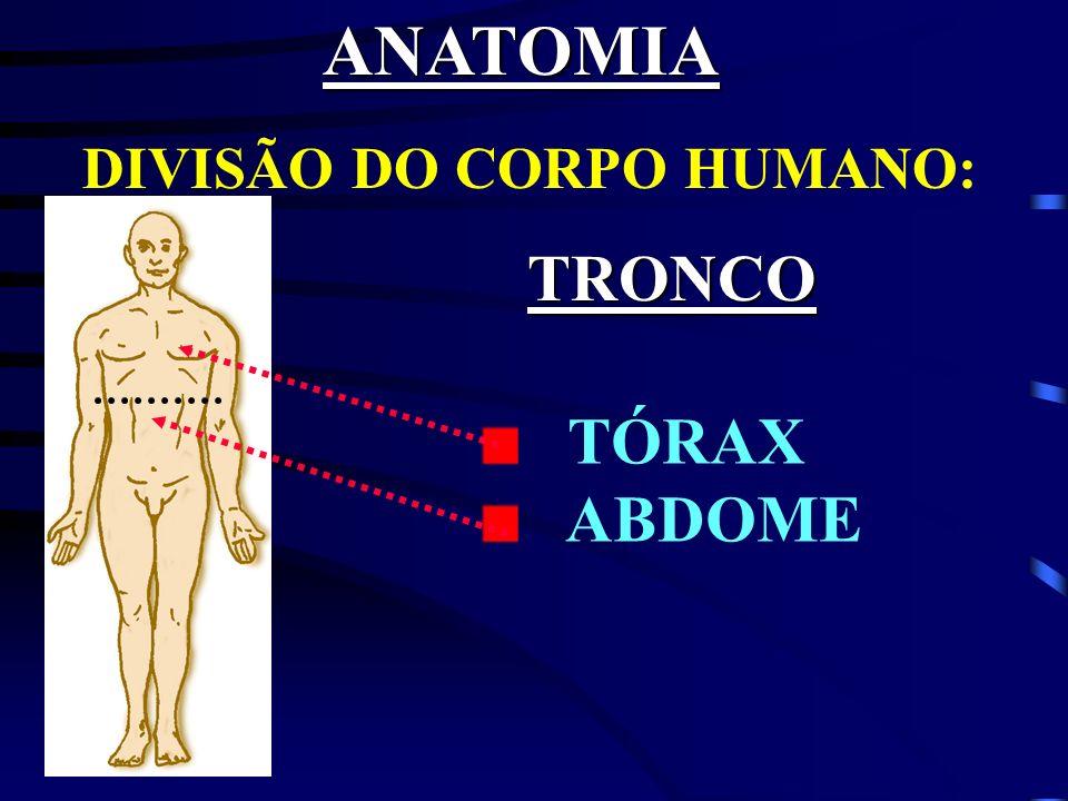 SISTEMA NERVOSO É constituído por inúmeras células nervosas.