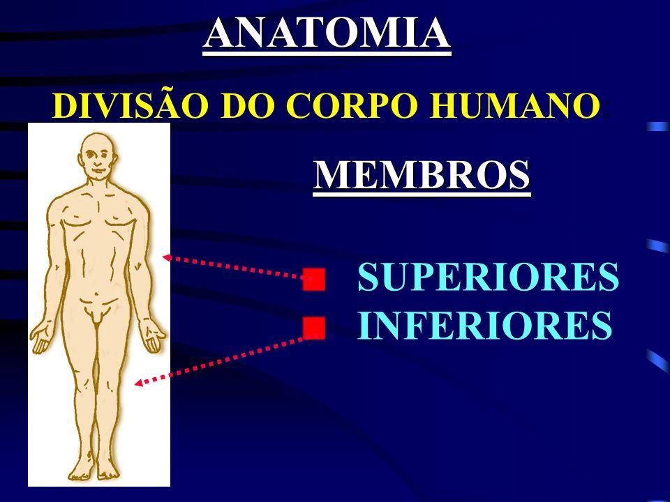 DIVISÃO DO CORPO HUMANO: MEMBROS SUPERIORES INFERIORESANATOMIA