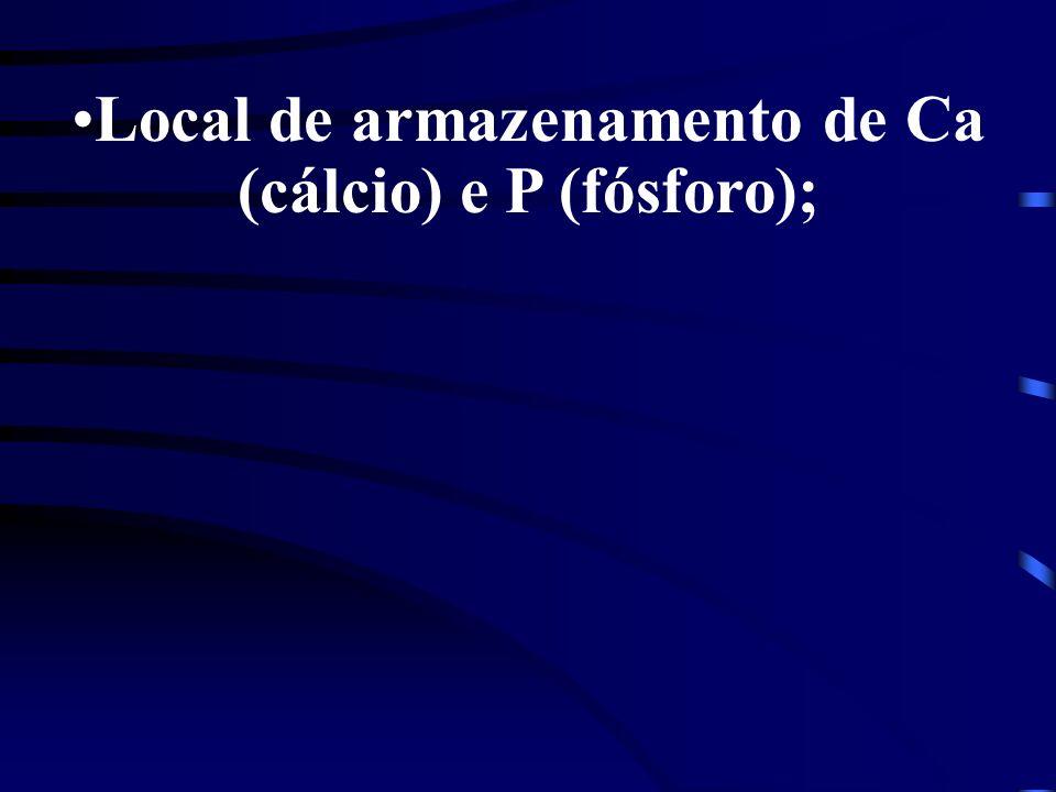 Local de armazenamento de Ca (cálcio) e P (fósforo);