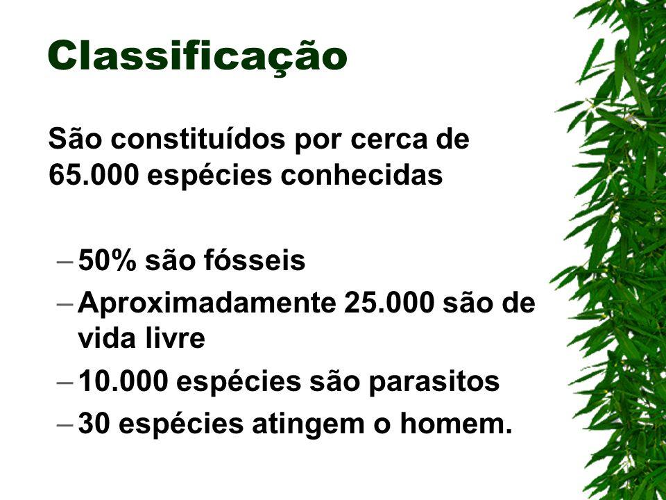 Protoctistas Heterótrofos Professor Edilson Soares
