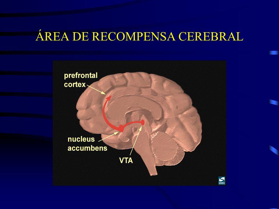 ÁREA DE RECOMPENSA CEREBRAL