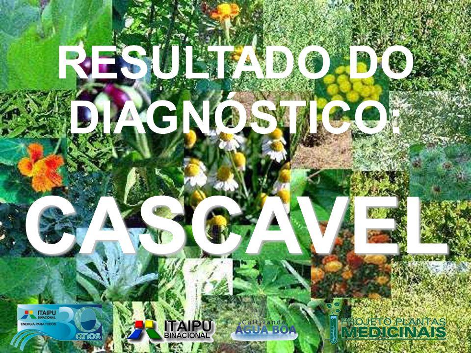 FABRO / 2005 RESULTADO DO DIAGNÓSTICO:CASCAVEL