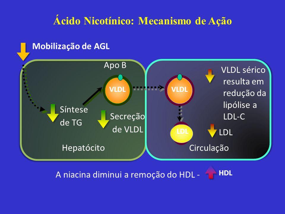 Hepatócito Circulação A niacina diminui a remoção do HDL - VLDL sérico resulta em redução da lipólise a LDL-C LDL VLDL Secreção de VLDL Apo B Mobiliza