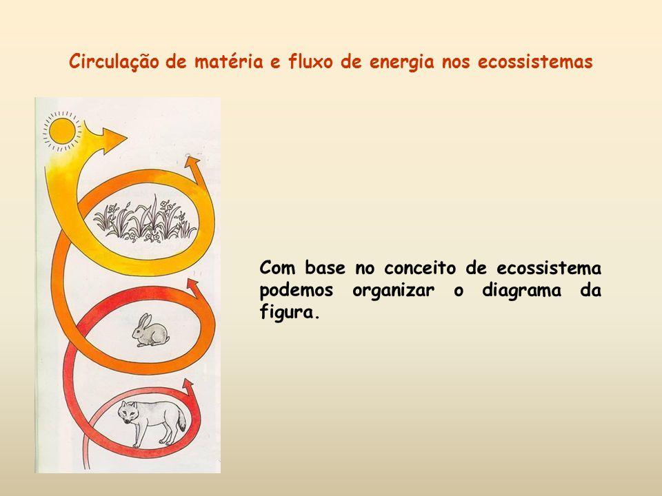 Circulação de matéria e fluxo de energia nos ecossistemas Com base no conceito de ecossistema podemos organizar o diagrama da figura.