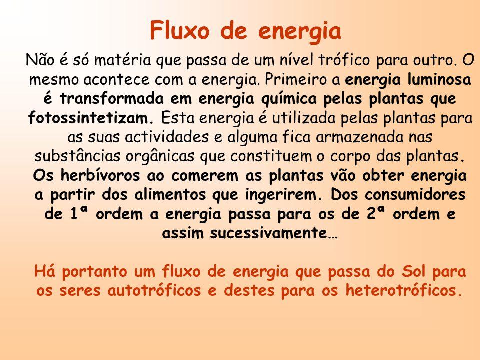 Fluxo de energia Não é só matéria que passa de um nível trófico para outro. O mesmo acontece com a energia. Primeiro a energia luminosa é transformada
