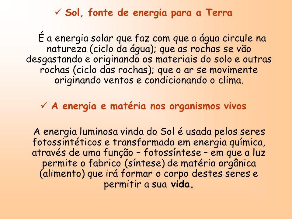Circulação da matéria e da energia nas cadeias alimentares Através de uma cadeia alimentar passa matéria e energia.