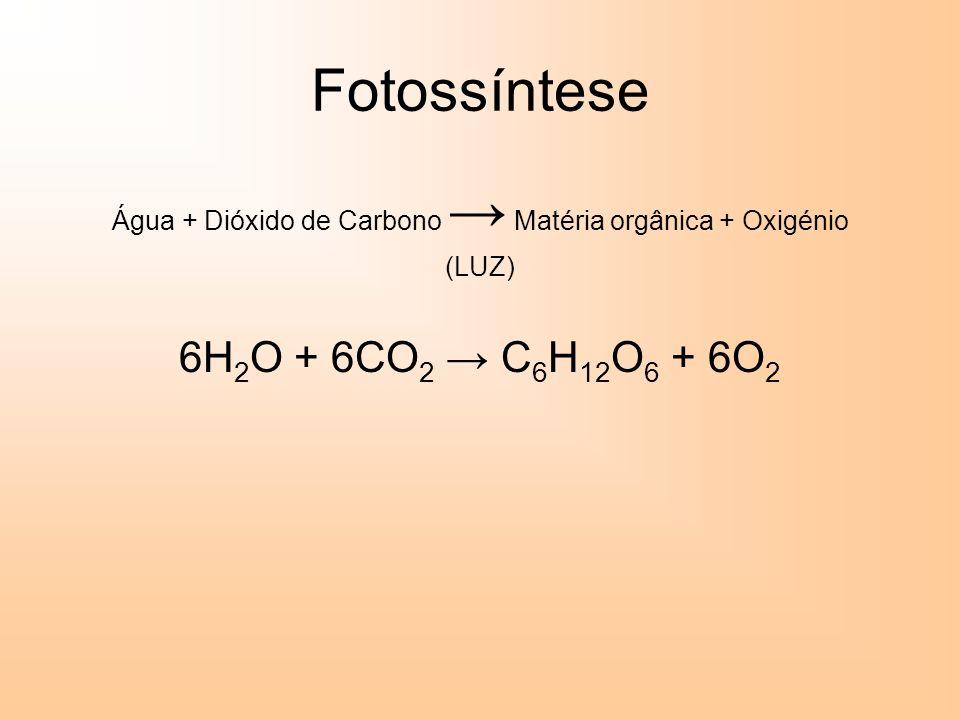 Fotossíntese Água + Dióxido de Carbono Matéria orgânica + Oxigénio (LUZ) 6H 2 O + 6CO 2 C 6 H 12 O 6 + 6O 2
