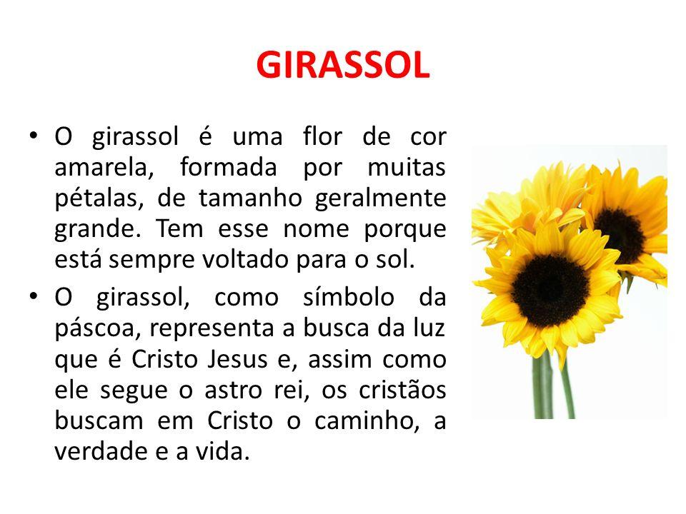 GIRASSOL O girassol é uma flor de cor amarela, formada por muitas pétalas, de tamanho geralmente grande. Tem esse nome porque está sempre voltado para