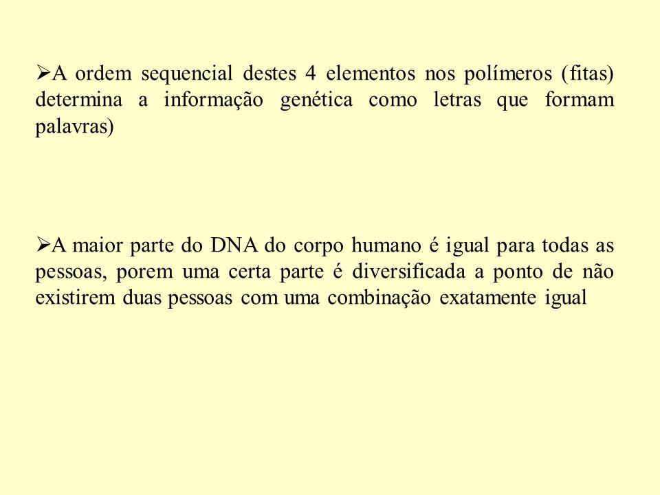 A ordem sequencial destes 4 elementos nos polímeros (fitas) determina a informação genética como letras que formam palavras) A maior parte do DNA do corpo humano é igual para todas as pessoas, porem uma certa parte é diversificada a ponto de não existirem duas pessoas com uma combinação exatamente igual
