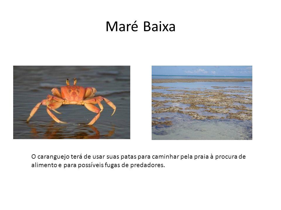 Maré Baixa O caranguejo terá de usar suas patas para caminhar pela praia à procura de alimento e para possíveis fugas de predadores.