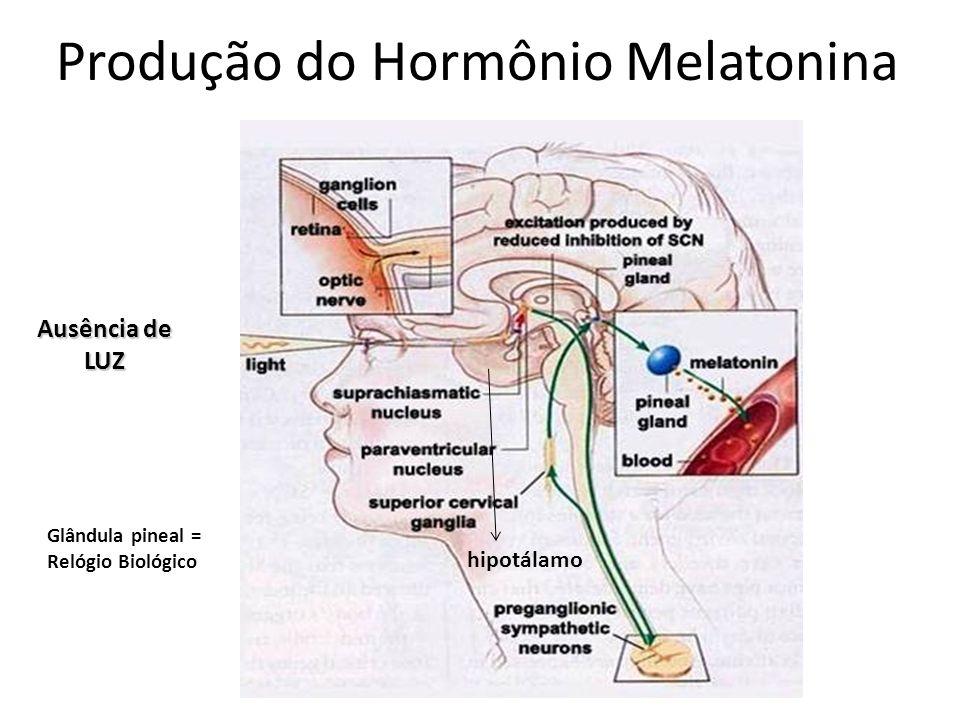 Ausência de LUZ Produção do Hormônio Melatonina hipotálamo Glândula pineal = Relógio Biológico