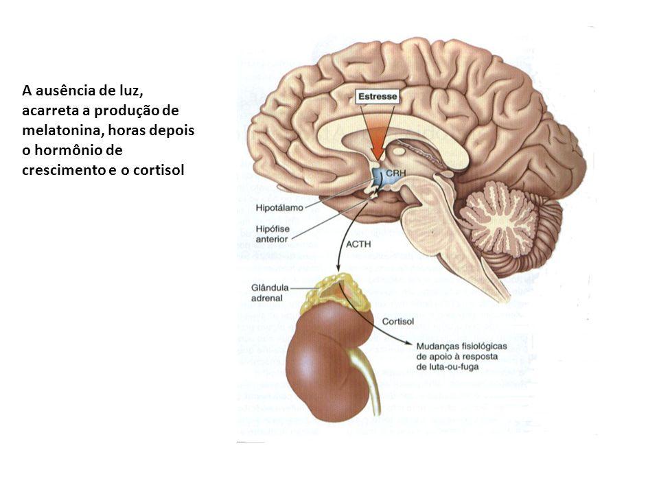 A ausência de luz, acarreta a produção de melatonina, horas depois o hormônio de crescimento e o cortisol