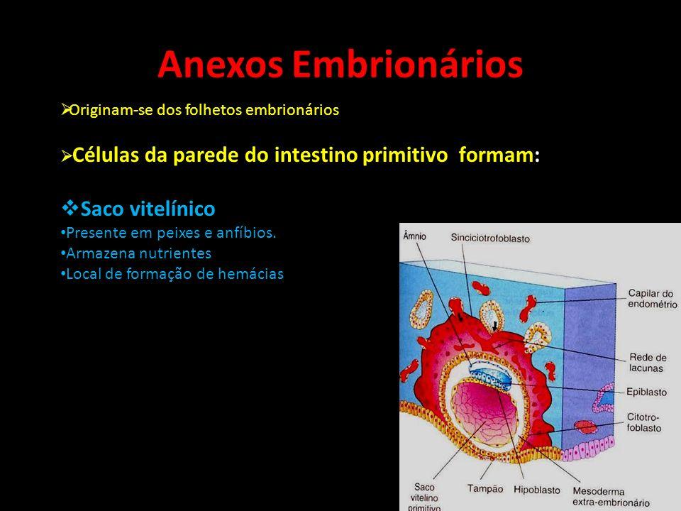 Anexos Embrionários Originam-se dos folhetos embrionários Células da parede do intestino primitivo formam: Saco vitelínico Presente em peixes e anfíbi