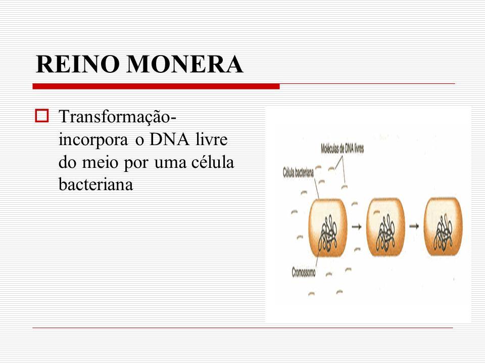 REINO MONERA Transformação- incorpora o DNA livre do meio por uma célula bacteriana