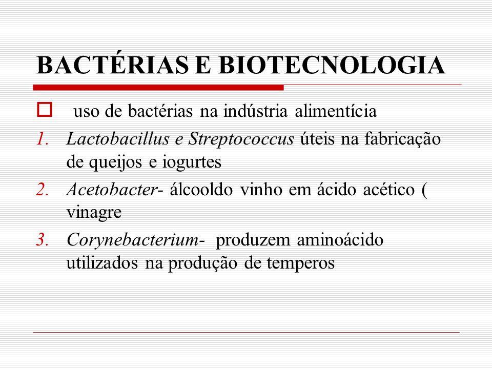 BACTÉRIAS E BIOTECNOLOGIA uso de bactérias na indústria alimentícia 1.Lactobacillus e Streptococcus úteis na fabricação de queijos e iogurtes 2.Acetobacter- álcooldo vinho em ácido acético ( vinagre 3.Corynebacterium- produzem aminoácido utilizados na produção de temperos