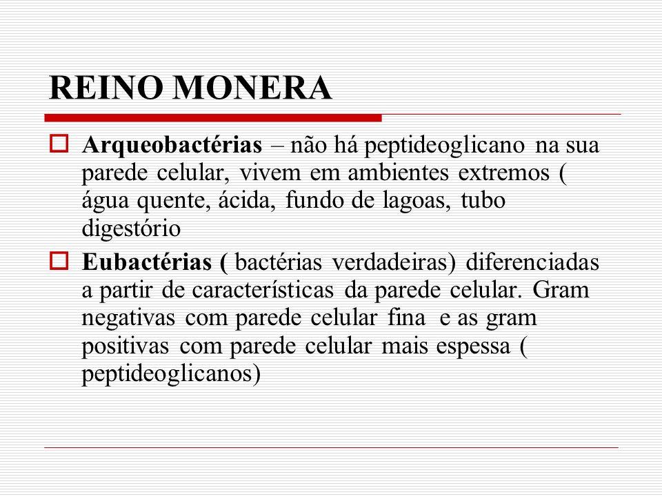 REINO MONERA Arqueobactérias – não há peptideoglicano na sua parede celular, vivem em ambientes extremos ( água quente, ácida, fundo de lagoas, tubo digestório Eubactérias ( bactérias verdadeiras) diferenciadas a partir de características da parede celular.