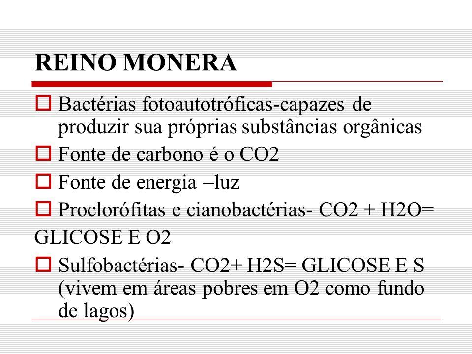 REINO MONERA Bactérias fotoautotróficas-capazes de produzir sua próprias substâncias orgânicas Fonte de carbono é o CO2 Fonte de energia –luz Proclorófitas e cianobactérias- CO2 + H2O= GLICOSE E O2 Sulfobactérias- CO2+ H2S= GLICOSE E S (vivem em áreas pobres em O2 como fundo de lagos)