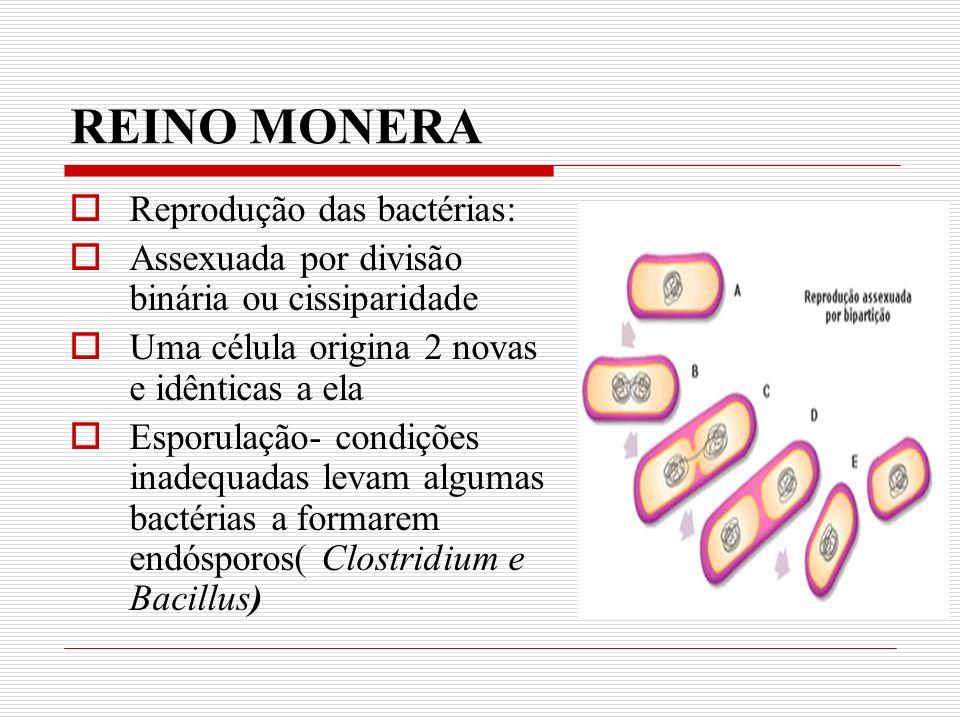 REINO MONERA Reprodução das bactérias: Assexuada por divisão binária ou cissiparidade Uma célula origina 2 novas e idênticas a ela Esporulação- condições inadequadas levam algumas bactérias a formarem endósporos( Clostridium e Bacillus)