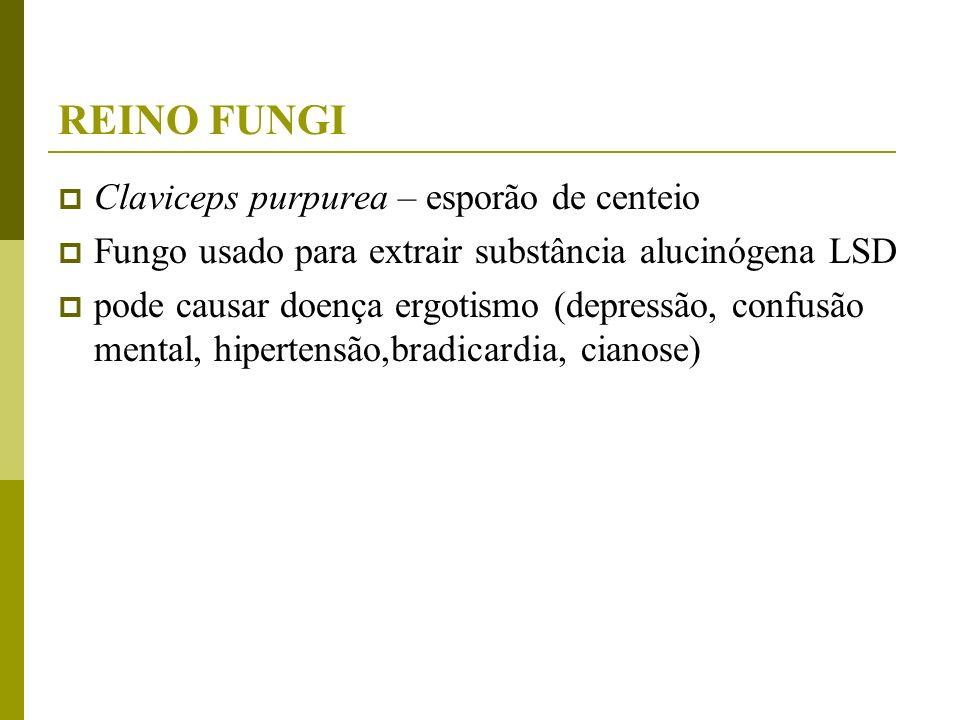 REINO FUNGI Claviceps purpurea – esporão de centeio Fungo usado para extrair substância alucinógena LSD pode causar doença ergotismo (depressão, confu