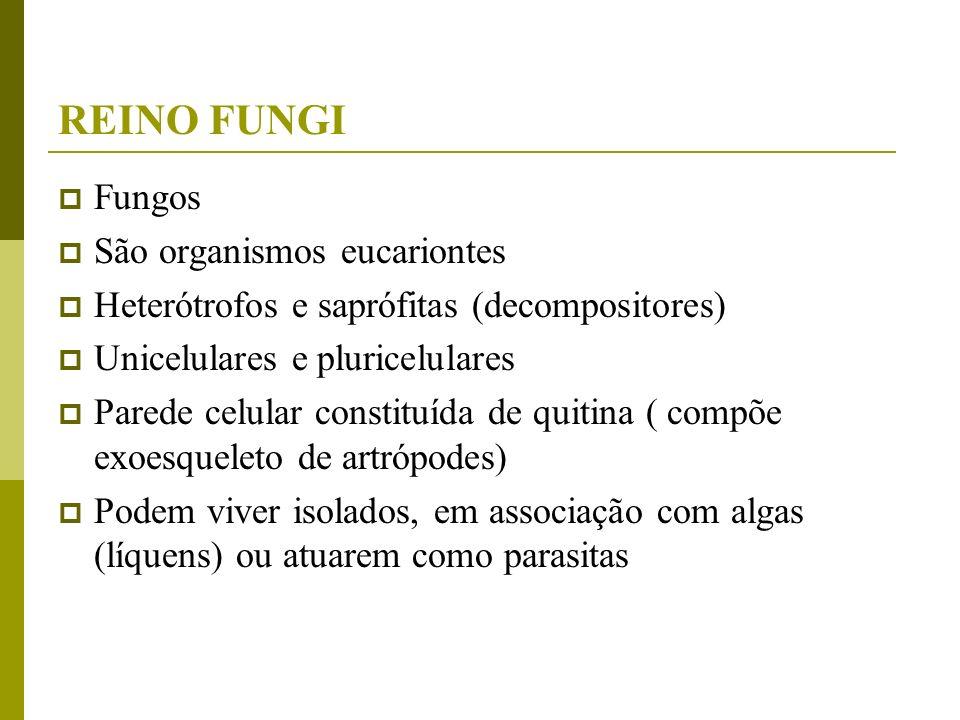 REINO FUNGI Fungos São organismos eucariontes Heterótrofos e saprófitas (decompositores) Unicelulares e pluricelulares Parede celular constituída de q
