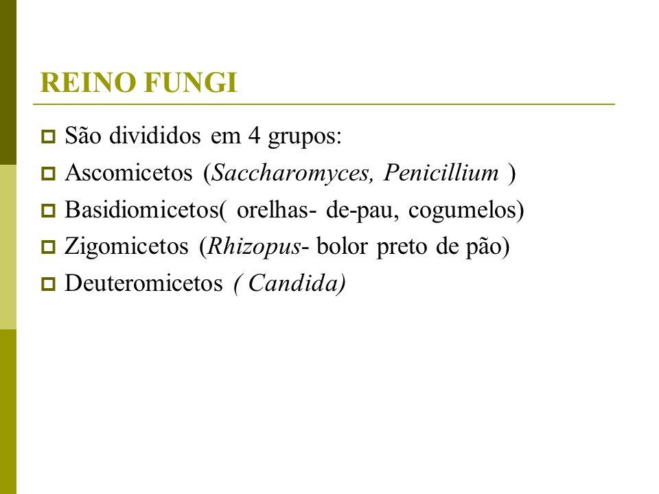 REINO FUNGI São divididos em 4 grupos: Ascomicetos (Saccharomyces, Penicillium ) Basidiomicetos( orelhas- de-pau, cogumelos) Zigomicetos (Rhizopus- bo