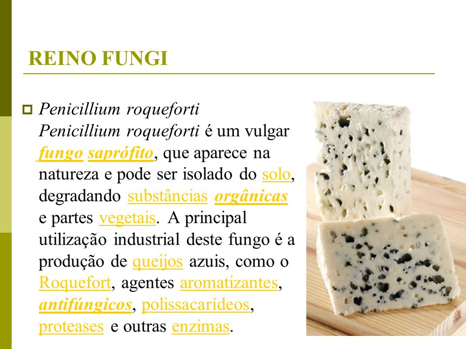REINO FUNGI Penicillium roqueforti Penicillium roqueforti é um vulgar fungo saprófito, que aparece na natureza e pode ser isolado do solo, degradando