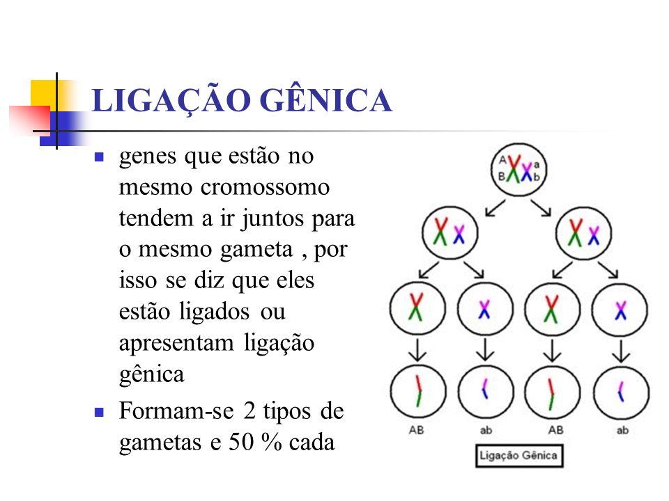 LIGAÇÃO GÊNICA genes que estão no mesmo cromossomo tendem a ir juntos para o mesmo gameta, por isso se diz que eles estão ligados ou apresentam ligaçã