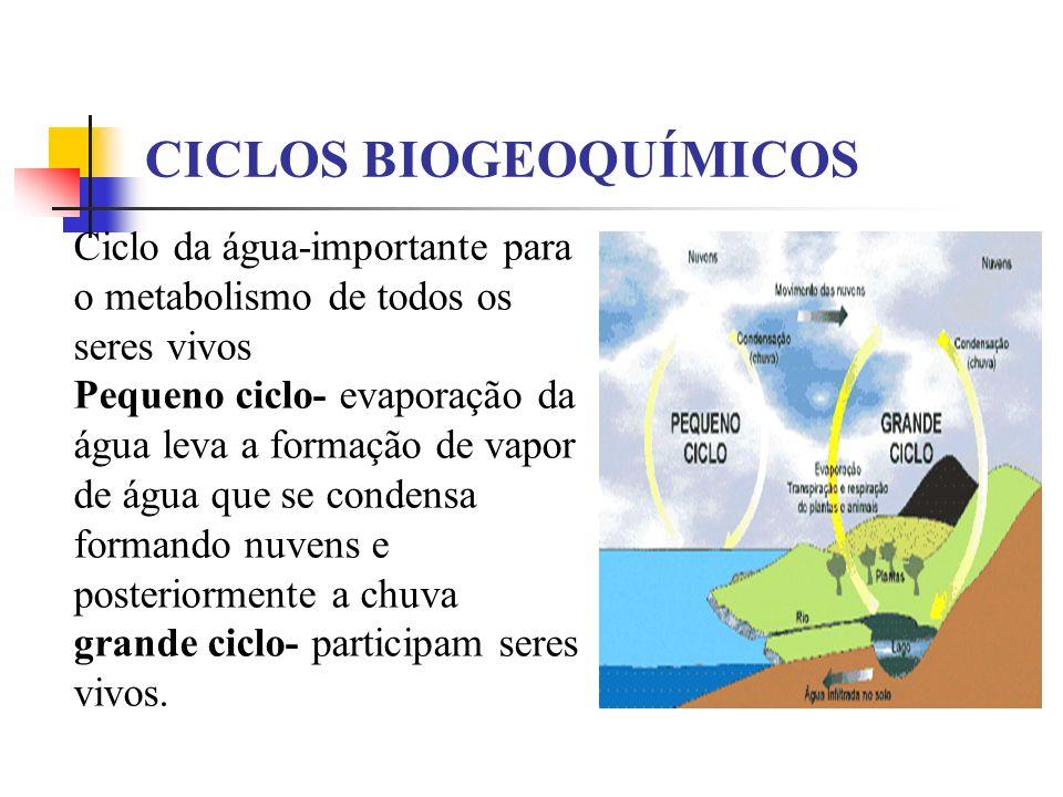 CICLOS BIOGEOQUÍMICOS Ciclo da água-importante para o metabolismo de todos os seres vivos Pequeno ciclo- evaporação da água leva a formação de vapor d