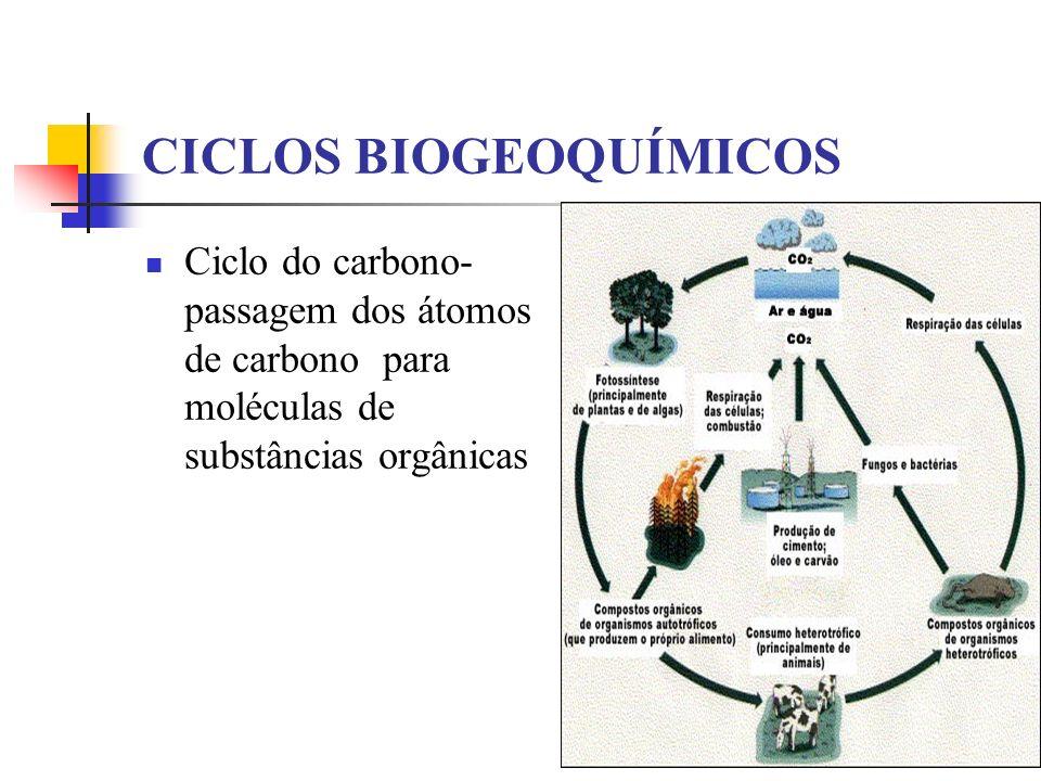 CICLOS BIOGEOQUÍMICOS Ciclo do carbono- passagem dos átomos de carbono para moléculas de substâncias orgânicas