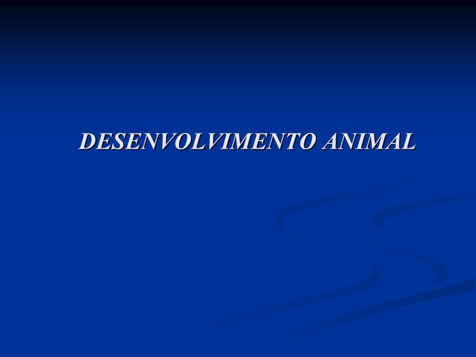 DESENVOLVIMENTO ANIMAL