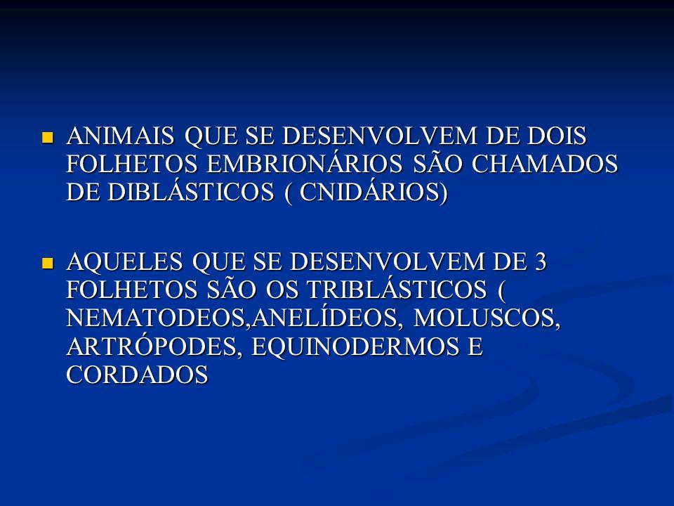 ANIMAIS QUE SE DESENVOLVEM DE DOIS FOLHETOS EMBRIONÁRIOS SÃO CHAMADOS DE DIBLÁSTICOS ( CNIDÁRIOS) ANIMAIS QUE SE DESENVOLVEM DE DOIS FOLHETOS EMBRIONÁ