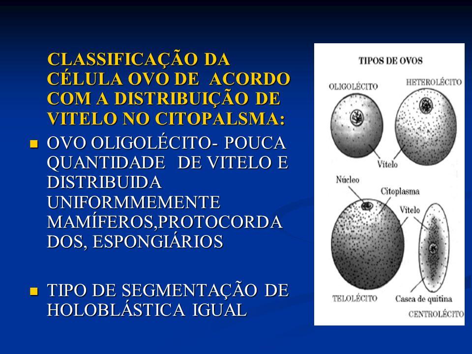 OVO MEDIOLÉCITO OU HETEROLÉCITO- VITELO IRREGULARMENTE DISTRIBUIDO PELA CÉLULA (MAIS CONCENTRADO EM UM POLO VEGETATIVO), ANFÍBIOS, MOLUSCOS, PLANTELMINTOS OVO MEDIOLÉCITO OU HETEROLÉCITO- VITELO IRREGULARMENTE DISTRIBUIDO PELA CÉLULA (MAIS CONCENTRADO EM UM POLO VEGETATIVO), ANFÍBIOS, MOLUSCOS, PLANTELMINTOS TIPO DE SEGMENTAÇÃO DE HOLOBLÁSTICA DESIGUAL TIPO DE SEGMENTAÇÃO DE HOLOBLÁSTICA DESIGUAL