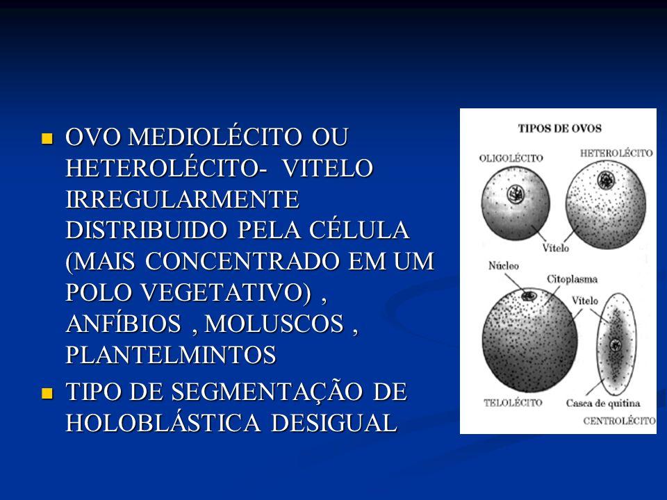 OVO MEGALÉCITO OU TELOLÉCITO COMPLETO- CONTÉM MUITO VITELO NA CÉLULA OVO MEGALÉCITO OU TELOLÉCITO COMPLETO- CONTÉM MUITO VITELO NA CÉLULA PEIXES, RÉPTEIS E AVES PEIXES, RÉPTEIS E AVES TIPO DE SEGMENTAÇÃO- MEROBLÁSTICA DISCOIDAL TIPO DE SEGMENTAÇÃO- MEROBLÁSTICA DISCOIDAL
