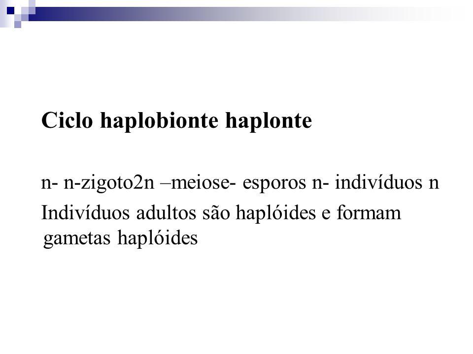 Ciclo haplobionte haplonte n- n-zigoto2n –meiose- esporos n- indivíduos n Indivíduos adultos são haplóides e formam gametas haplóides