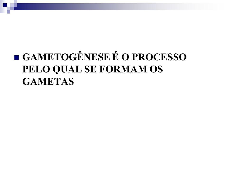 GÔNADAS ESTRUTURAS RESPONSÁVEIS PELA FORMAÇÃO DE GAMETAS E HORMÔNIOS SEXUAIS