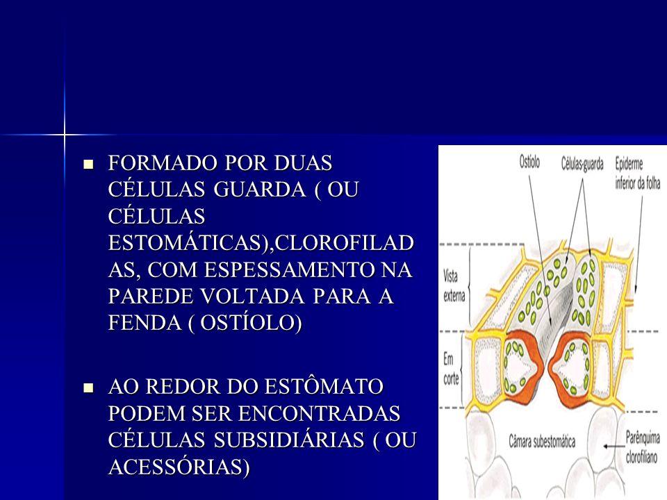 CONTROLAM AS TROCAS GASOSAS ENTRE A PLANTA E O AMBIENTE CONTROLAM AS TROCAS GASOSAS ENTRE A PLANTA E O AMBIENTE PELO ESTÔMATO ENTRA GÁS CARBÔNICO E SAI OXIGÊNIO E VAPOR DE ÁGUA PELO ESTÔMATO ENTRA GÁS CARBÔNICO E SAI OXIGÊNIO E VAPOR DE ÁGUA