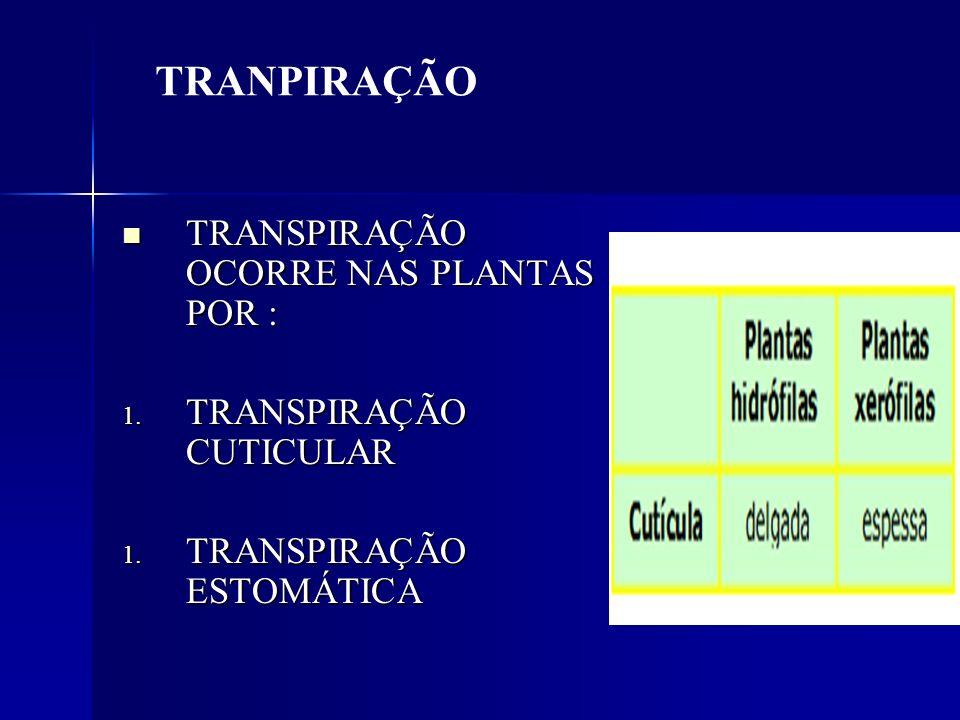 TRANSPIRAÇÃO OCORRE NAS PLANTAS POR : TRANSPIRAÇÃO OCORRE NAS PLANTAS POR : 1. TRANSPIRAÇÃO CUTICULAR 1. TRANSPIRAÇÃO ESTOMÁTICA TRANPIRAÇÃO