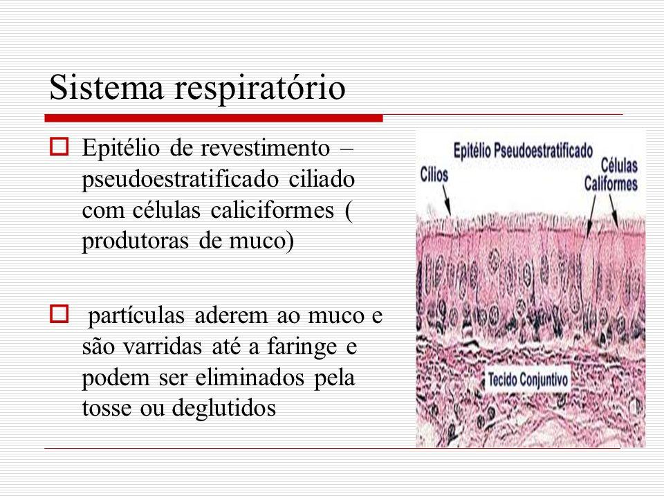 Sistema respiratório Epitélio de revestimento – pseudoestratificado ciliado com células caliciformes ( produtoras de muco) partículas aderem ao muco e