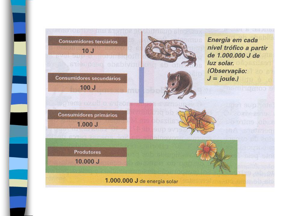 FLUXO DE ENERGIA E MATÉRIA NUM ECOSSISTEMA O fluxo de energia, num ecossistema, é um direcional, isto é, vai dos produtores até os decompositores, pas